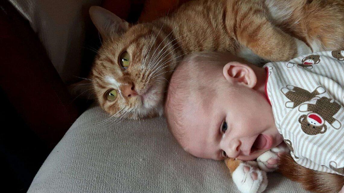 cat cuddling baby